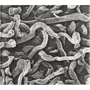 Кроскармеллоза натрия